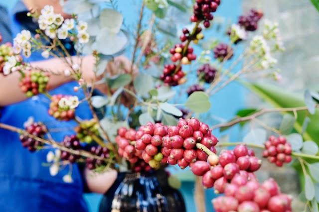 Giá cà phê hôm nay 9/7: Đồng loạt tăng 100 đồng/kg trên diện rộng