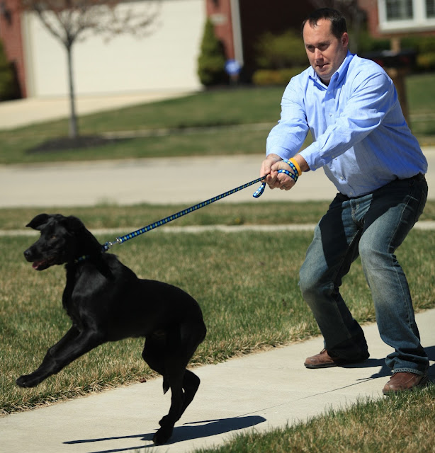 How to Stop a Dog From Pulling on the Leash?: The Best Ideas for Improving Your Walk