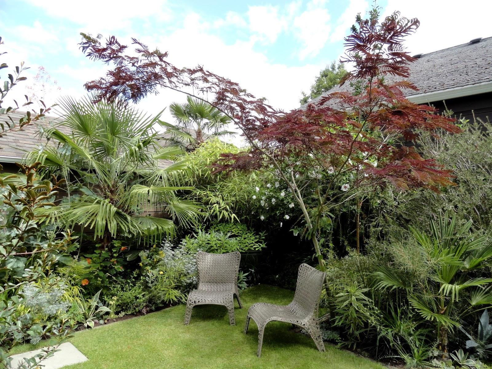 danger garden albizia julibrissin 39 summer chocolate 39 observations. Black Bedroom Furniture Sets. Home Design Ideas