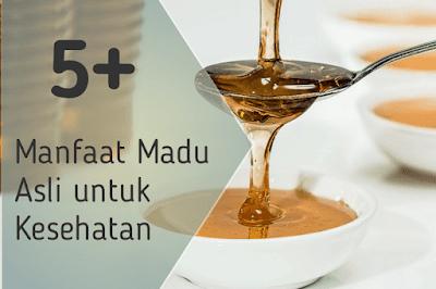 5+ Manfaat Madu Asli untuk Kesehatan