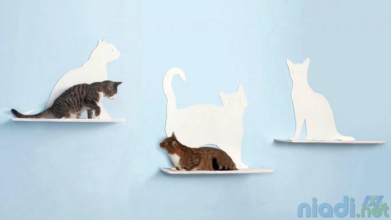 foto gambar jenis kucing lucu korea dan jepang