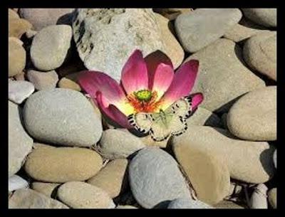Entre pedras nasceu uma flor onde uma borboleta vem pousar.
