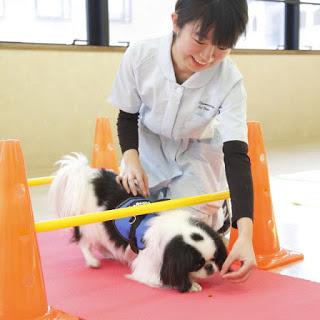 pilates para cães