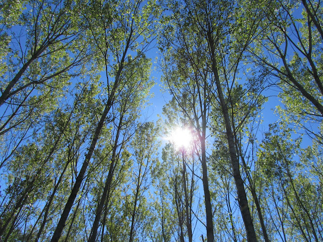 Sole autunnale nel sottobosco