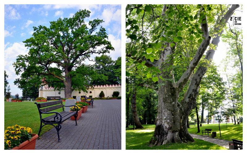 dab, historyczny park,