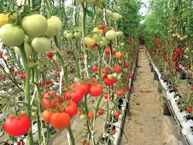 High Tech Agriculture The Extraordinary Profits Of