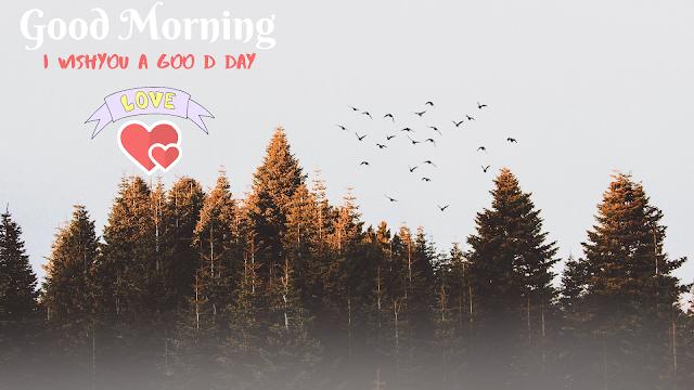 Many Bird Good Morning Images