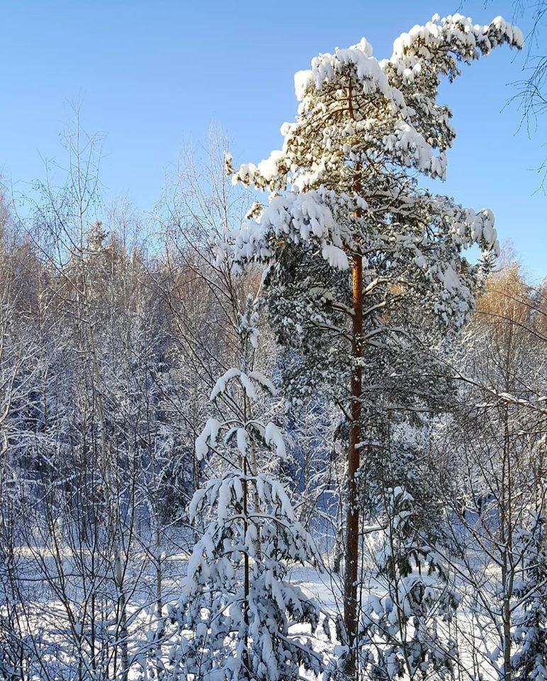 luminen tammikuun maisema