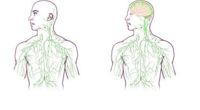 Old and New Representations of the Lymphatic System