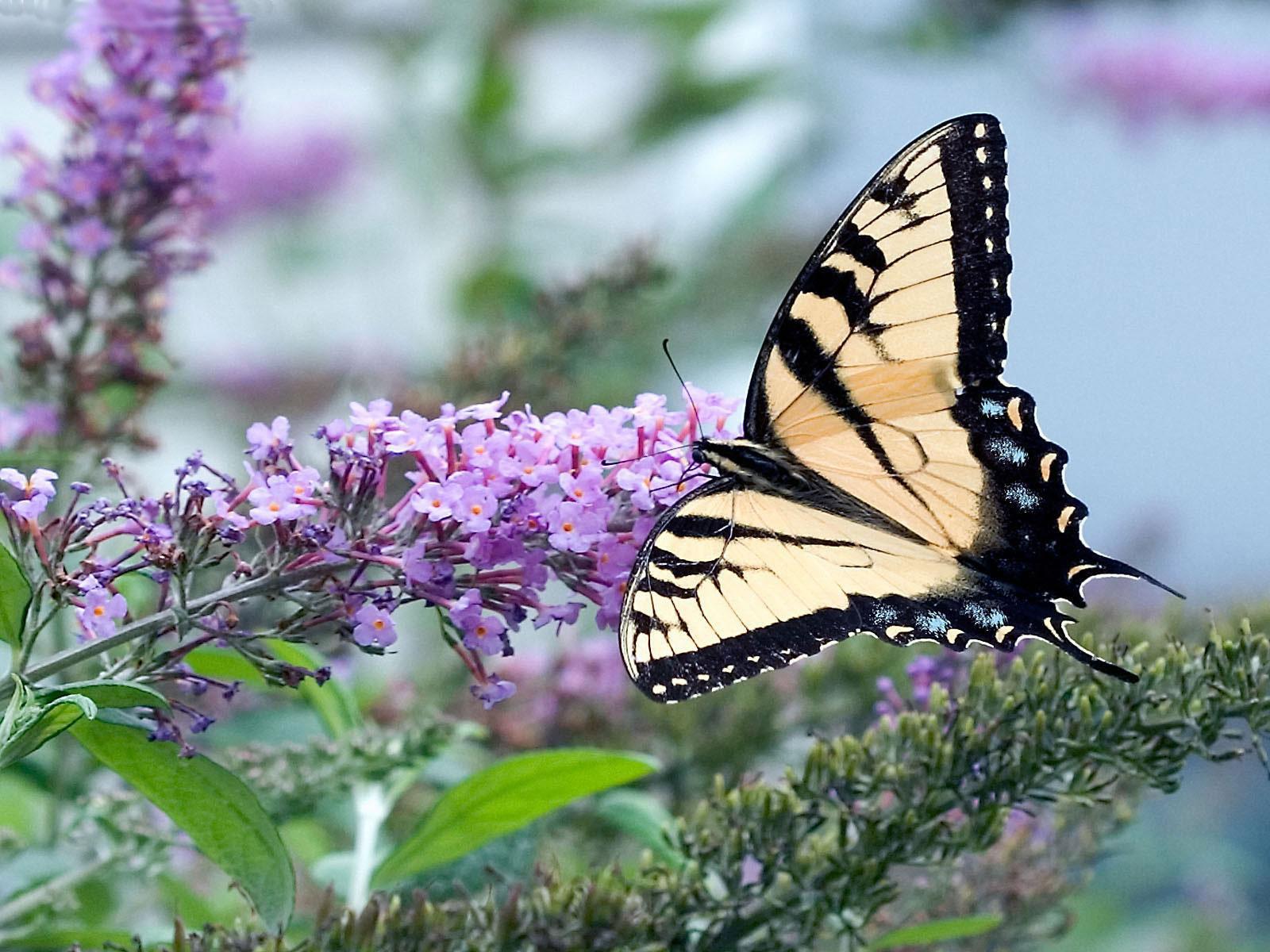 521 Entertainment World: Beautiful Butterfly Photos