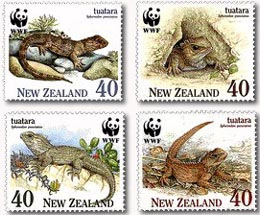 The Tuatara Is Sole Survivor From A Lineage Which Stretches Back Before Dinosaur Age Scientists Have Been Aware For Over Century Now That