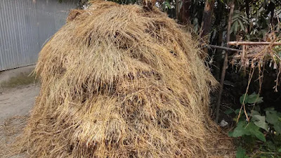 Pictures of haystack