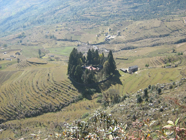This is Khiraule village and the piece of land surrounded by the tall pine trees is Khiraule Monastery, also known as Ngonpo Thyakchhok Chholing Monastery located in Khiraule, Solukhumbu, Nepal.
