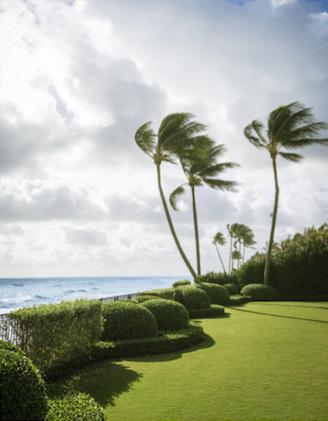 David Kleinberg Design in Palm Beach ocean view