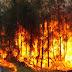 Metsä- ja maastopalot hillitsevät ilmaston lämpenemistä