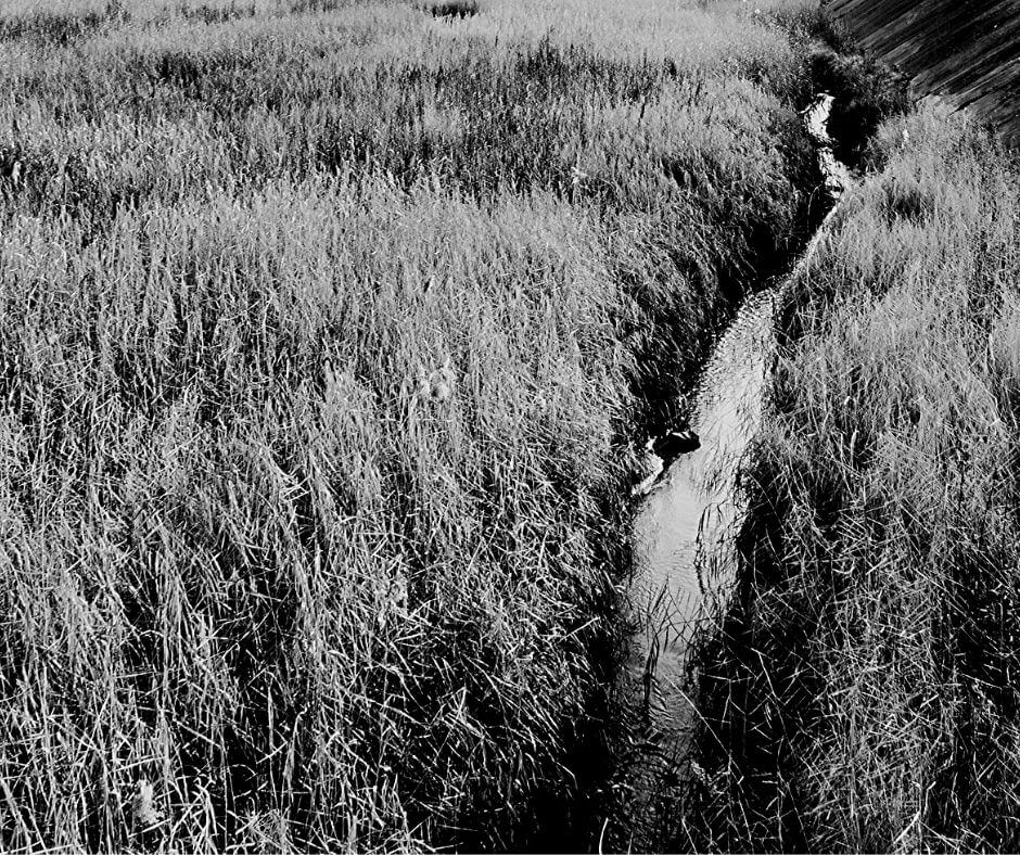 Joanne Dennehy - Peterborough Ditch Murders | She dumped a body in a ditch.