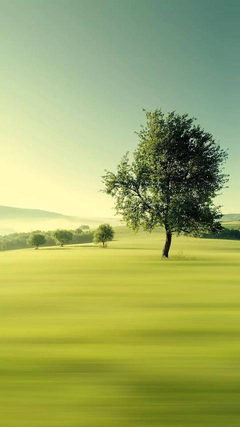 Cánh đồng xanh