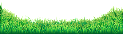 Png Grass Images