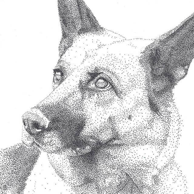 11-German-shepherd-Kelsey-Hammerton-www-designstack-co