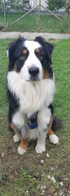 education canine annecy thones ugine faverges albertville