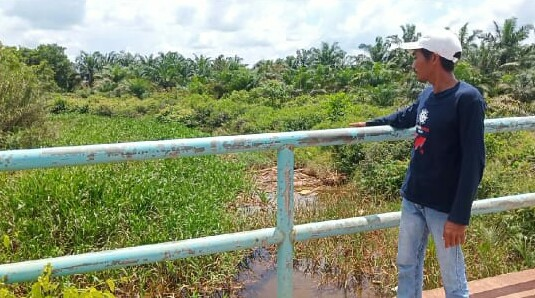Sering Tergenang Air, Hasil Buah Sawit Petani Di Muba Berkurang