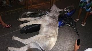 Motociclista fica em estado grave após atropelar jumento entre Pedra Lavrada e Nova Palmeira