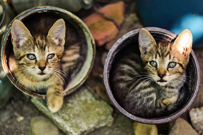 5. What's better than one kitten plant? Two!