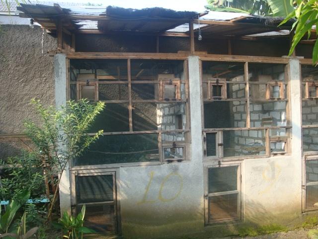 Penangkaran Murai Batu RRBF: Lokasi & Pofile Kandang ...