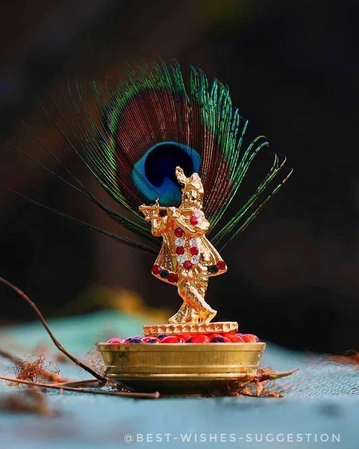 krishna-morpich-image