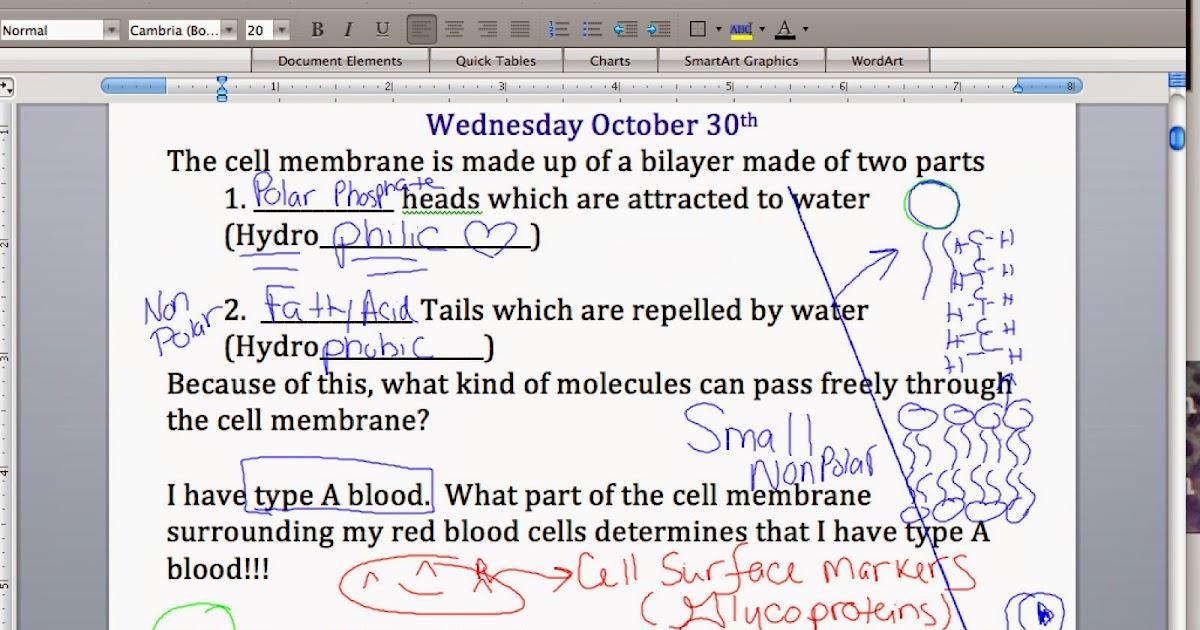 EC Honors Biology: Cell membrane notes part 2 - Passive