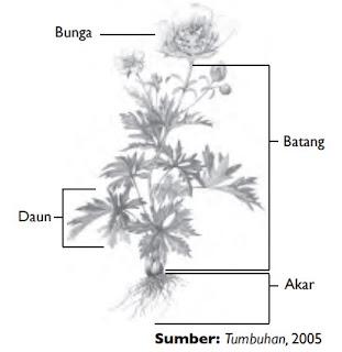 Bunga batang daun akar
