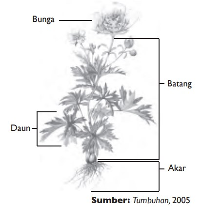 Struktur Tumbuhan - IPA Kelas 8