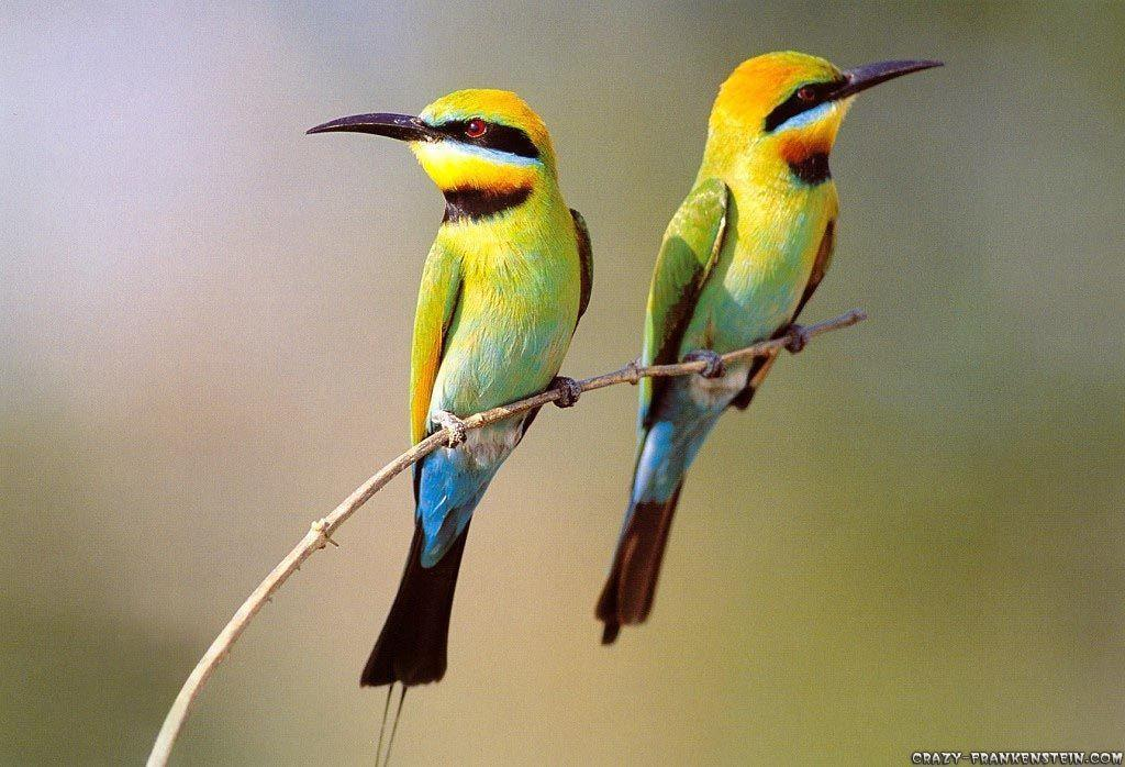 Birds Wallpapers Hd animals pictures