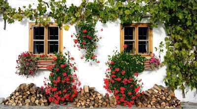 plantas en pared