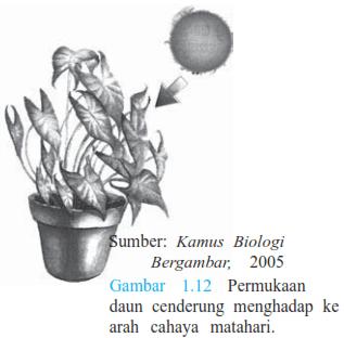 Ini Dia! Tahap dan Faktor Pertumbuhan serta Perkembangan Tumbuhan
