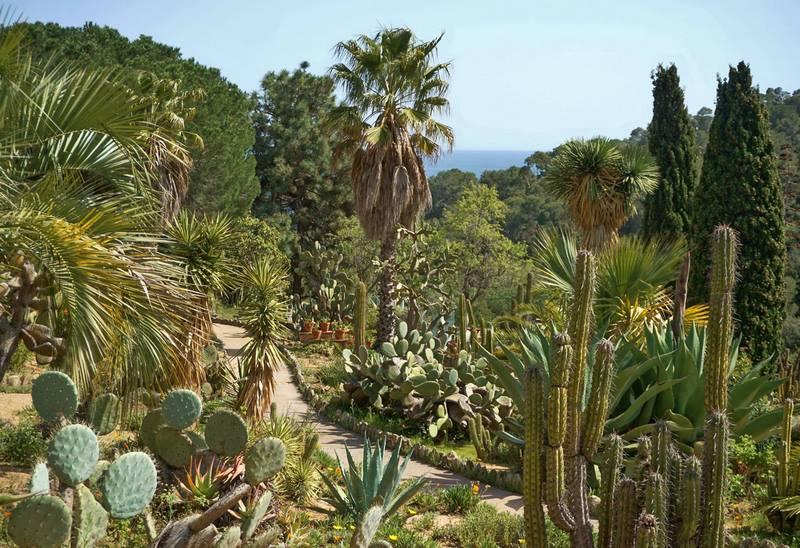 Jardín de cactus junto al mar de Mediterráneo