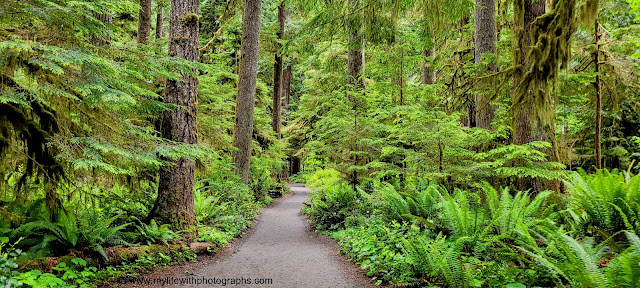 The forest and the beautiful Nature trail so green.