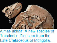 https://sciencythoughts.blogspot.com/2018/02/almas-ukhaa-new-species-of-troodontid.html