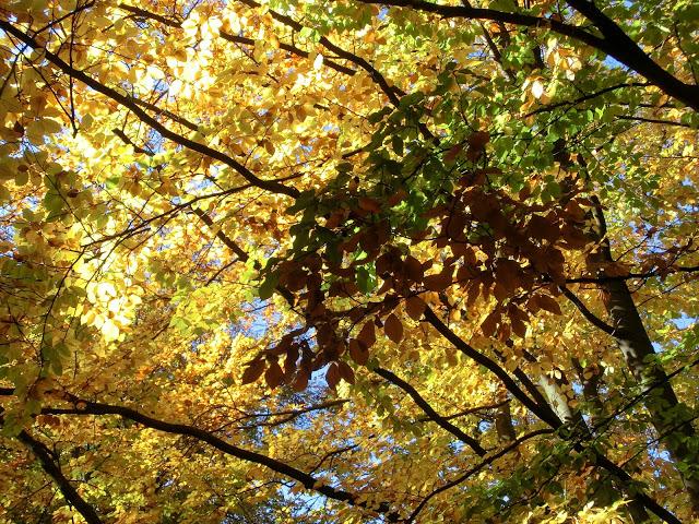 Www Wiersze Wycieczki Wspomnienia Wiersz O Jesieni Dla