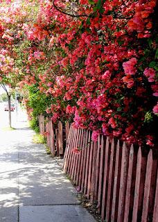 花の生け垣の写真。サンタモニカで。