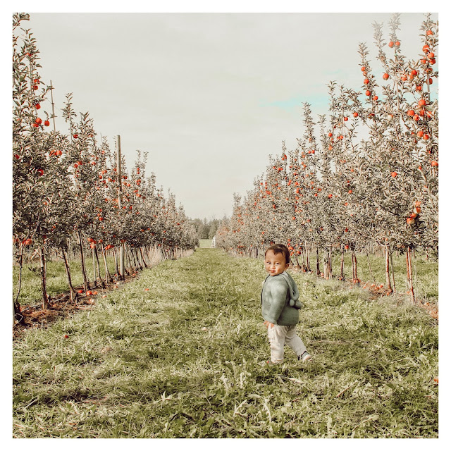 little boy apple picking