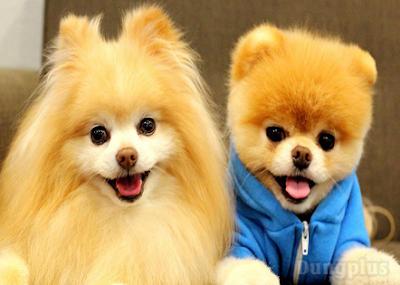 Hình ảnh chó con dễ thương nhất