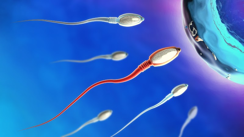How to keep your sperm healthy?