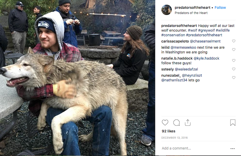 Island Filled With Friendly Wolves Invites Visitors To Stay In A Sanctuary