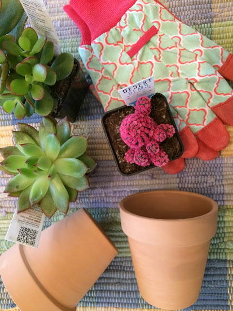 Create a bright succulent display by using painted terra cotta posts and Cricut vinyl words!