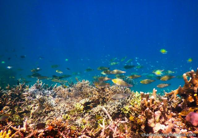 Coral reef and fish in Waigeo island of Raja Ampat