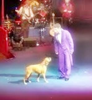 Arti Mimpi Pelatih Anjing