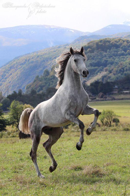 Cavalo | Horse