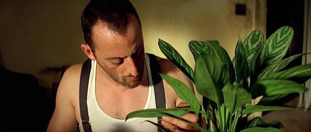 Planta Aglaonema en a películas la El Perfecto asesino