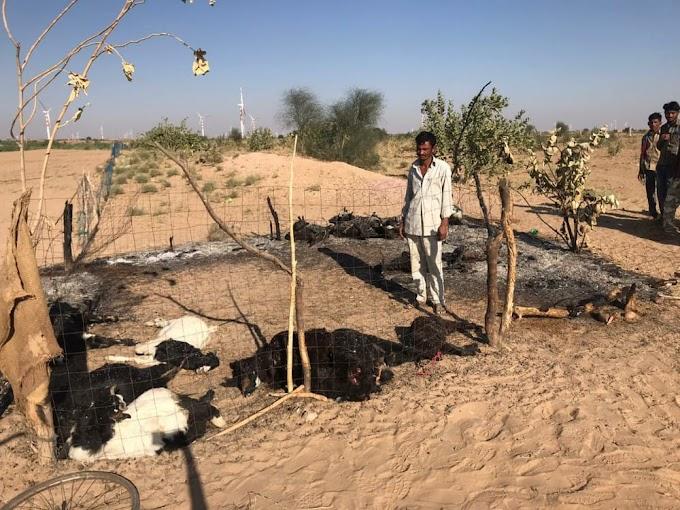 Jaiselmer- विद्युत विभाग की लापरवाही ने ली पशुओं की जान, बाड़े में बंद सभी बकरियां करंट लगने से ख़ाक